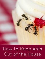 How to Keep Ants Out of the House